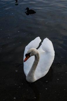 Lago Hide Park